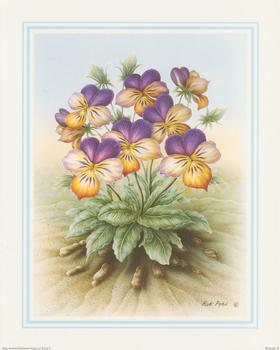 Rob Pohl - Purple and Yellow - Pansies 10