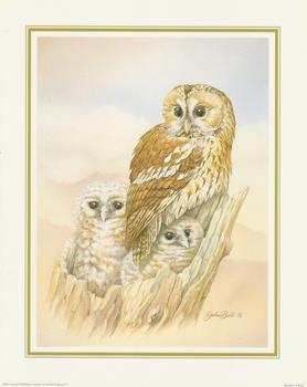 John Ball - Tawny Owl 10