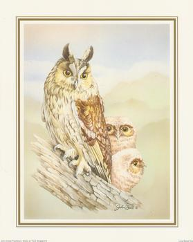 John Ball - Long Eared Owl 10