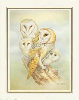 John Ball - Barn Owl 10