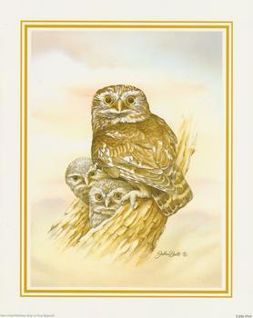 John Ball - Little Owl 10