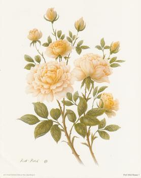 Wild Rose 1 - 10