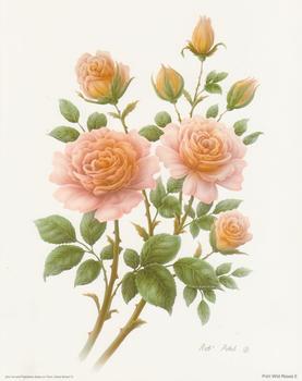 Wild Rose 2 - 10