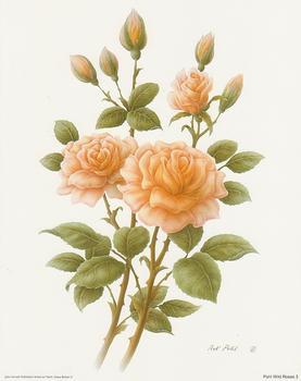 Wild Rose 3 - 10