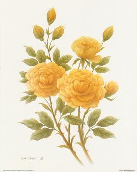 Wild Rose 4 - 10