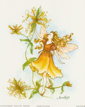 Garden Fairies B by Sharon Healey - 10
