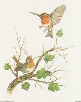 Garden Birds A - by J A Pulford - 10