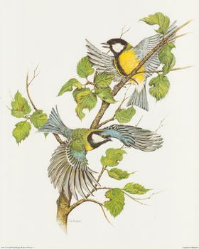Garden Birds C - by J A Pulford - 10