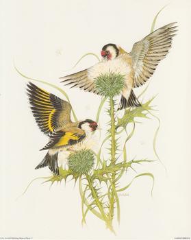 Garden Birds D - by J A Pulford - 10