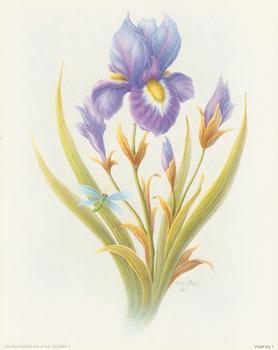 Violet Iris 1 -Rob Pohl - 8