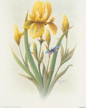 Yellow Iris - Rob Pohl - 10