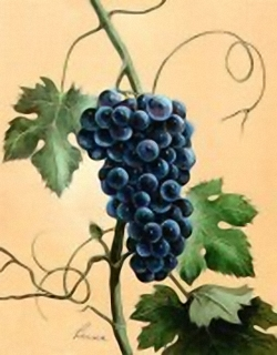 Grapes C11 Main Gallery Reina