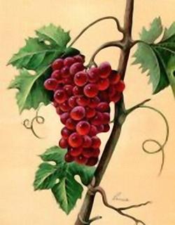 Grapes C12 Main Gallery Reina