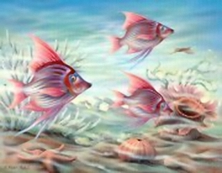 Coral Reef B2 Main Gallery Rob Pohl