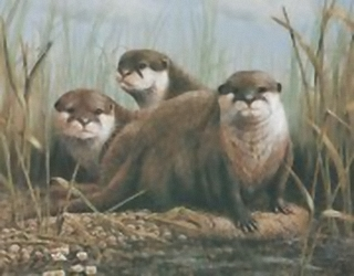 Otters B9 Main Gallery Mark Chester