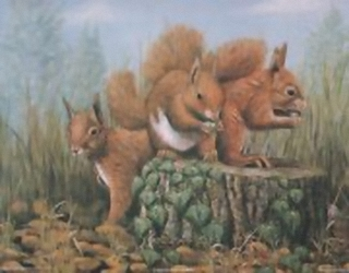Squirrels B10 Main Gallery Mark Chester