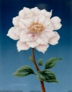 Camellia B1 Main Gallery Rob Pohl