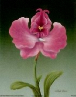 Pink Orchid B2 Main Gallery Rob Pohl