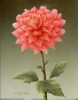 Dahlia B3 Main Gallery Rob Pohl