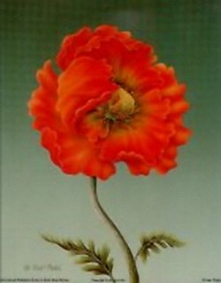 Orange Poppy B7 Main Gallery Rob Pohl