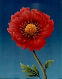 Pink Poppy B10 Main Gallery Rob Pohl