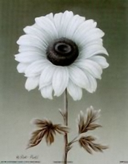 Black/White Daisy B1 Main Gallery Rob Pohl