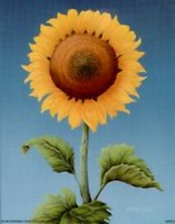 Sunflower B2 Main Gallery Rob Pohl
