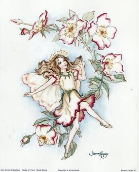 Flower Fairies C by Sharon Healey . Sharon Healey