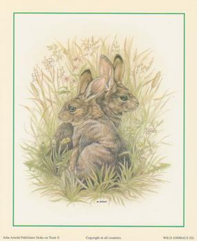 Rabbit - Wild Animals D - by S.Bews - 5