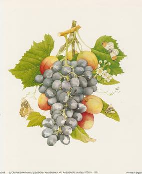 Grapes by Charles Raymond - 5