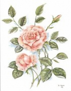 Pink Roses B3 Main Gallery OUT OF STOCK