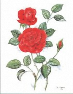 Red Roses B4 Main Gallery