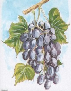 Bunch Of Grapes D3 Main Gallery papertole.co.uk