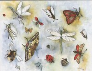 Butterflies & Ladybirds B8 Main Gallery D A H
