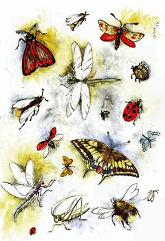 Butterflies & Ladybirds B8 Main Gallery D A H