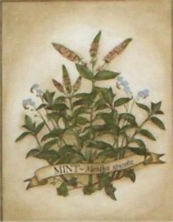 Mint - Mentha Spicata J3 Main Gallery Not Known