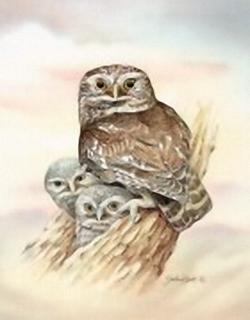 Little Owl K8 Main Gallery John Ball