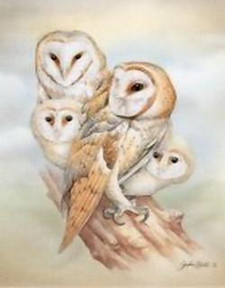 Barn Owl K9 Main Gallery John Ball