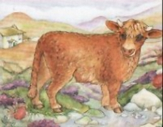 Highland Cow K6 Main Gallery Not Known