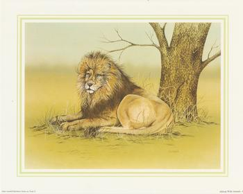 **LION** African Wild Animal (A) by J A Pulford 5