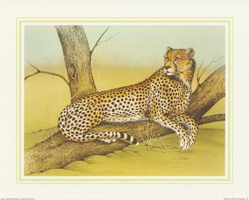 **CHEETAH** African Wild Animal (D) by J A Pulford 5