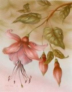 Fuchsia K8 Main Gallery Rob Pohl