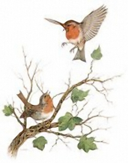Garden Birds K3 J.A Pulford