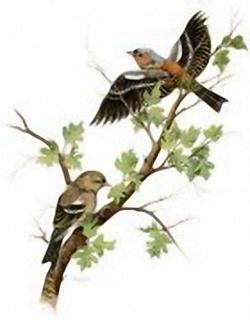 Garden Birds K2 Main Gallery J A Pulford