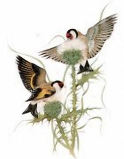 Garden Birds K3 Main Gallery J A Pulford