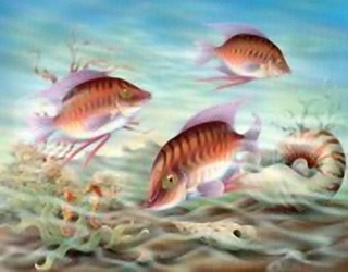 Coral Reef Fish K4 Main Gallery Rob Pohl