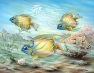 Coral Reef Fish K5 Main Gallery Rob Pohl