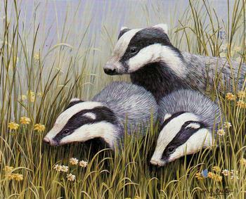 English Animals K3 - Badger Family 6