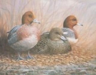Ducks Trio K4 Main Gallery Mark Chester