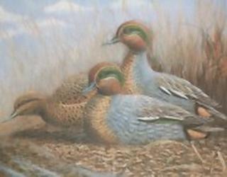 Ducks Trio K5 Main Gallery Mark Chester